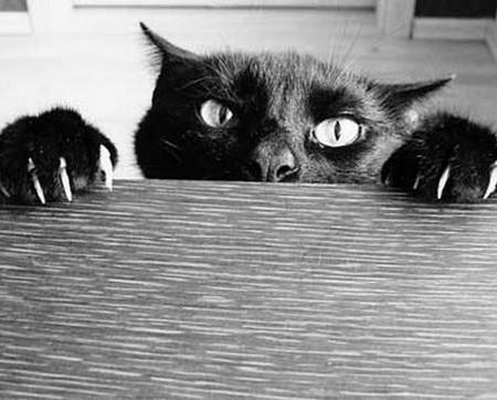 black-cat-450x362