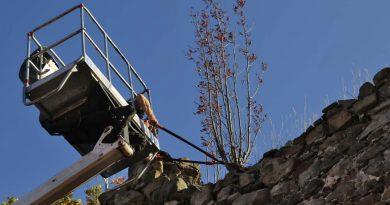 Usunęli krzaki porastające najstarszy zabytek w Świebodzicach